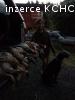 2 chovné feny pro zájemce z Nového Zélandu